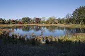 Meadow Lake At Morton Arboretum