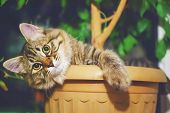 Funny Portrait Of A Furry Tabby Cat, Lies In A Long Pot Plant With Green Grass, With A Dark Green Ba poster
