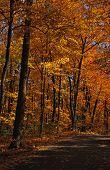 Morton Arboretum Fall Colors
