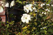 Mid-summer Bloom