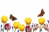 Composition From Tulips And Butterflies