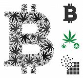 Bitcoin Composition Of Marijuana Leaves In Variable Sizes And Color Tinges. Vector Flat Hemp Leaves  poster