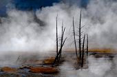Geysers and steam from hot springs rising in Yellowstone National Park poster