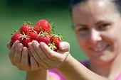 Fresh Picked Strawberries
