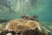 Tropical Coral Reef Underwater