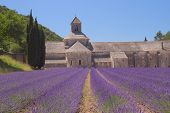 Senanque Abbey (provence, France)