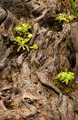 picture of flytrap  - a few venus fly traps on a log - JPG