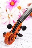 Classical violin  with flowers on notes
