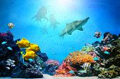 stock photo of sky diving  - Underwater scene - JPG