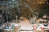 Jardín bajo la nieve