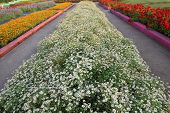 Row of flowerbed in agriculturist tourist farm.