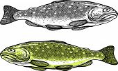 Vector illustration of Trout in vintage engraved style