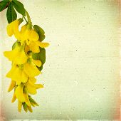 Vintage Floral Background With Yellow Acacia Flowers On A Brown Background Old Paper Grunge, For Any