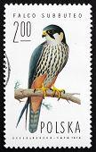 Postage Stamp Poland 1975 Hobby Falcon, Bird Of Prey