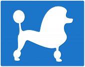 blue dog poodle image