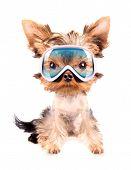 dog with ski mask