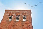 A triangular flight of migratory birds flying over the bell tower in Venice. Sunny Day