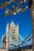 Tower Bridge In The Spring