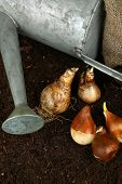 picture of humus  - Composition with watering can - JPG