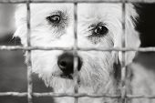 foto of stray dog  - A dog in an animal shelter - JPG
