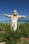 foto of scarecrow  - Jesolo  - JPG