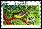 Vintage  Postage Stamp.  Yellow-headed Warbler.