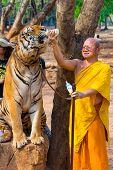 SAMUI, THAILAND - MARCH 27: Abbot Phra Acharn Phoosit Khantidharo feeds tiger by milk on March 27, 2014 in Wat Pa Luangta Bua Yannasampanno Forest Monastery, Tiger Temple, Kanchanaburi, Thailand.