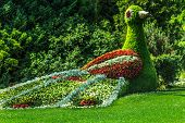 Colorful Bird of many flowers on Flower Island Mainau, Lake Constance, Germany