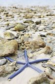Starfish Among Stones