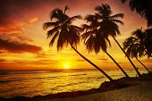Beautiful sunset over the sea with a view at palms on the white beach on a Caribbean island of Barba