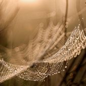 Cobweb in the morning light