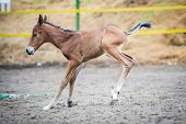 Colt (2-day) walks and played in paddock