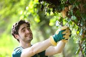 Young Attractive Gardener Cutting Leaves