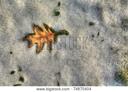 leaf surrounded by melting snow