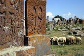 Armenian Graveyard With Sheeps