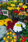 Flowers at the market in Amsterdam