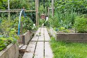 stock photo of planters  - Allotment garden with wooden path and raised bed planters - JPG