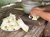 Making Tamales In Cuba
