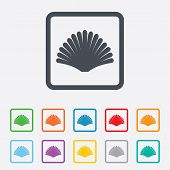 Sea shell sign icon. Conch symbol. Travel icon.