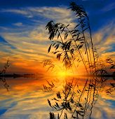 Scene with grass on sunset background with water reflection