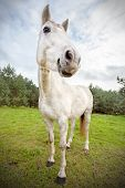 Picture Of Funny Horse, Shallow Depth Of Field.