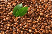 full frame of brown roasted coffee seeds