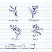 stock photo of citronella  - Handdrawn Illustration  - JPG