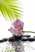 Orchid and wet black stones with palm leaf