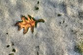 stock photo of frozen  - leaf surrounded by melting snow in evening sun - JPG