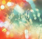 Sunny autumn meadow
