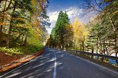 mountain road .a series of pictures of autumn road