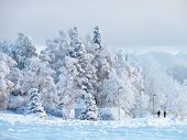 Picture-perfect winter