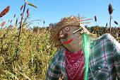 pic of scarecrow  - Scarecrow - JPG