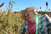 stock photo of scarecrow  - Scarecrow - JPG